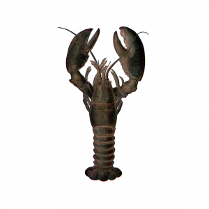 Lobster Small: 1kg *Final price depends on weight of the product