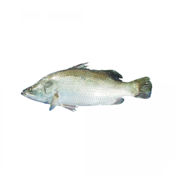 Koral: 1kg *Final price depends on the weight of the fish