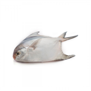 Rupchanda fish enedao